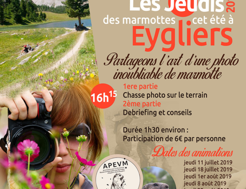 APEVM – Affiches rencontres 2019